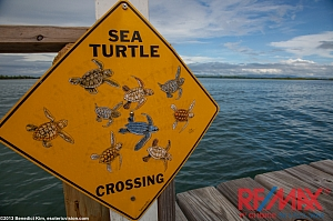Caution Sign Turtle