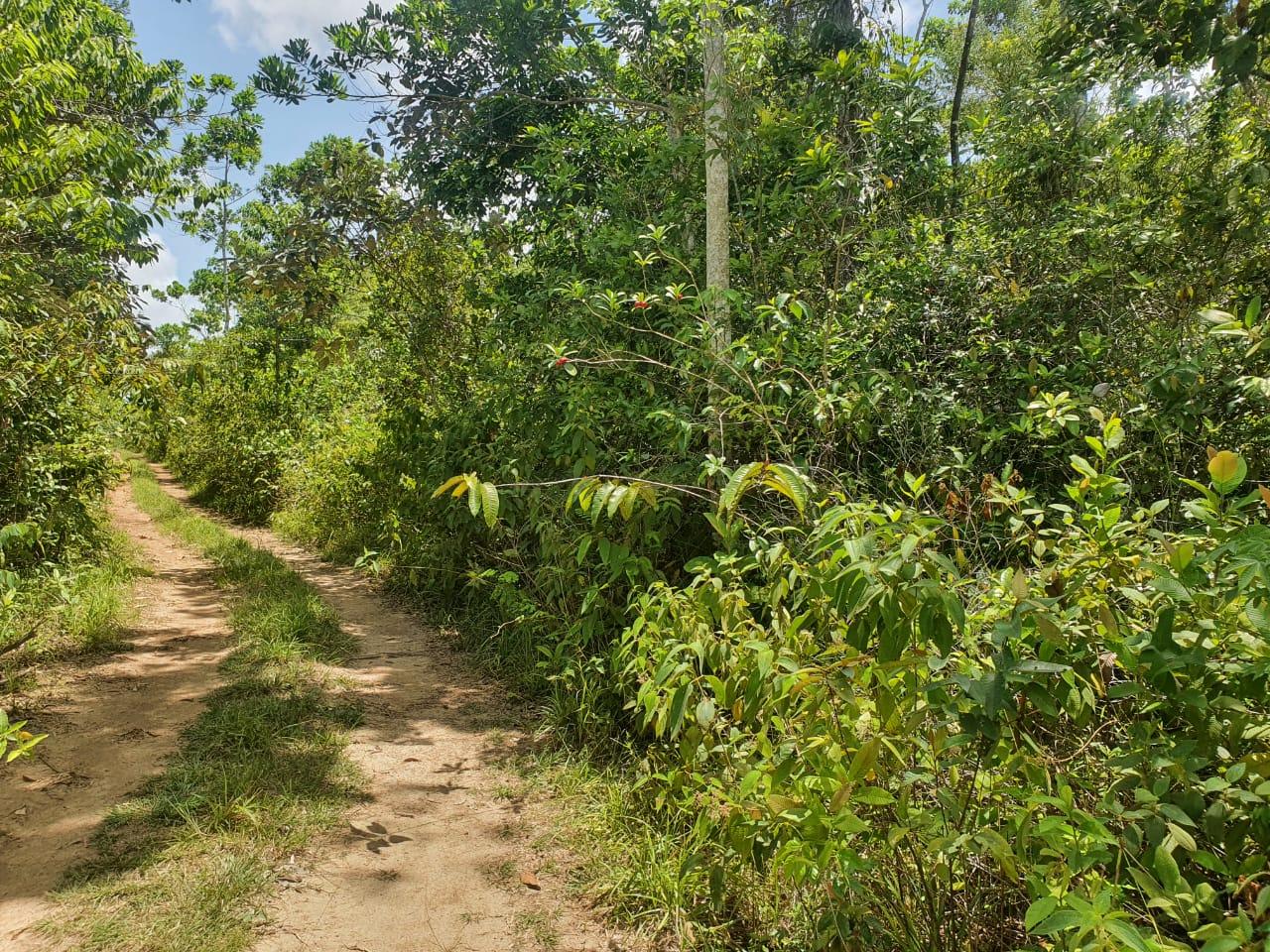 RE/MAX real estate, Belize, Dangriga, Small Farm near Boccawina