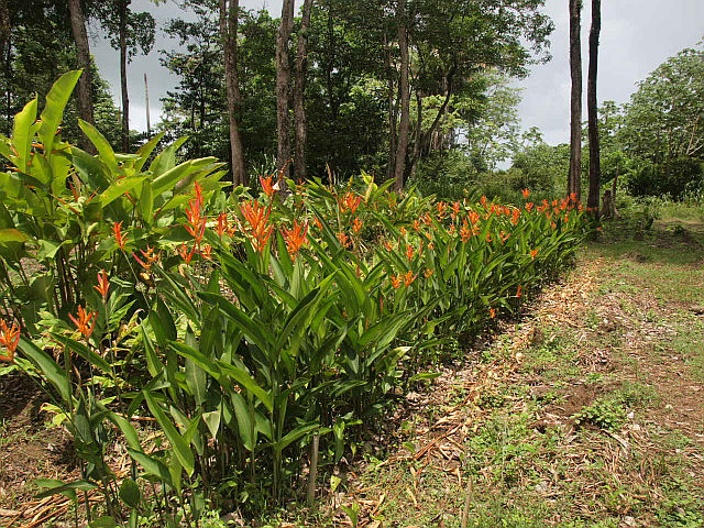 RE/MAX real estate, Belize, Sittee River, 630ft of Sittee River