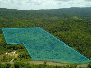 65 acres of Lush Jungle with Creek on the Hummingbird Highway