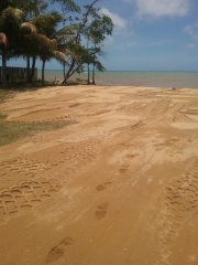 1 Acre Caribbean Beach Lot. Ready for your Dreams...! Comes with a Tiny House.