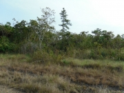 24 Acres Located At 7 1/2 Southern Highway, Stann Creek, Belize