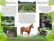 Misty Meadow Farms - Lot 1, one acre parcel - Cayo