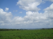 Misty Meadow Farms - Lot 8, one acre parcel - Cayo
