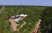 50 Acre Citrus Farm  and Wood working shop on Southern Highway