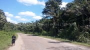 30 Acres of Pristine Jungle on the Hummingbird Highway