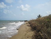 8 Acres of Beachfront in Monkey River