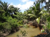 35 Acre Coconut farm with creek by Red Bank