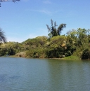 7.4 Acres on Sittee River