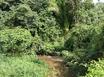 9 Acres of Jungle on Stream between Georgetown and Maya Mopan