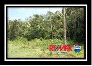 Lot #30 - Tropical Paradise 2