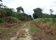 5 Acres of partially cleared jungle outside Dangriga