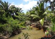 35 Acre Coconut Farm with Creek by Redbank