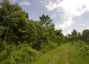 40 Acres of Jungle with Creek