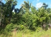 50 Acres with Stream off the Coastal Highway