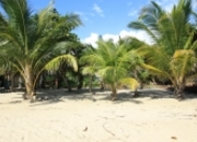 Beautiful Beach Lot In Plantation